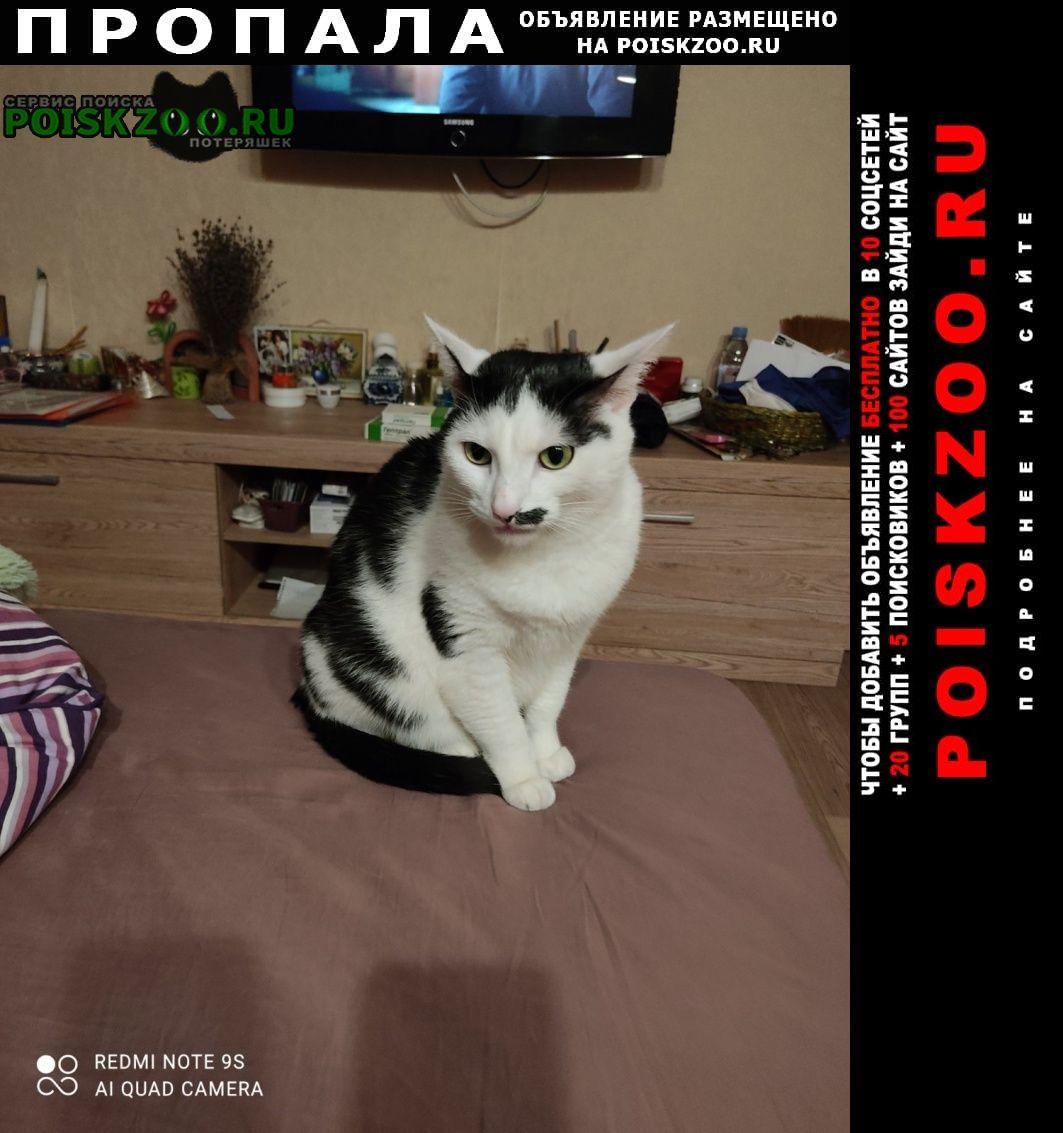 Пропал кот 1 мая выбежал из квартиры Москва