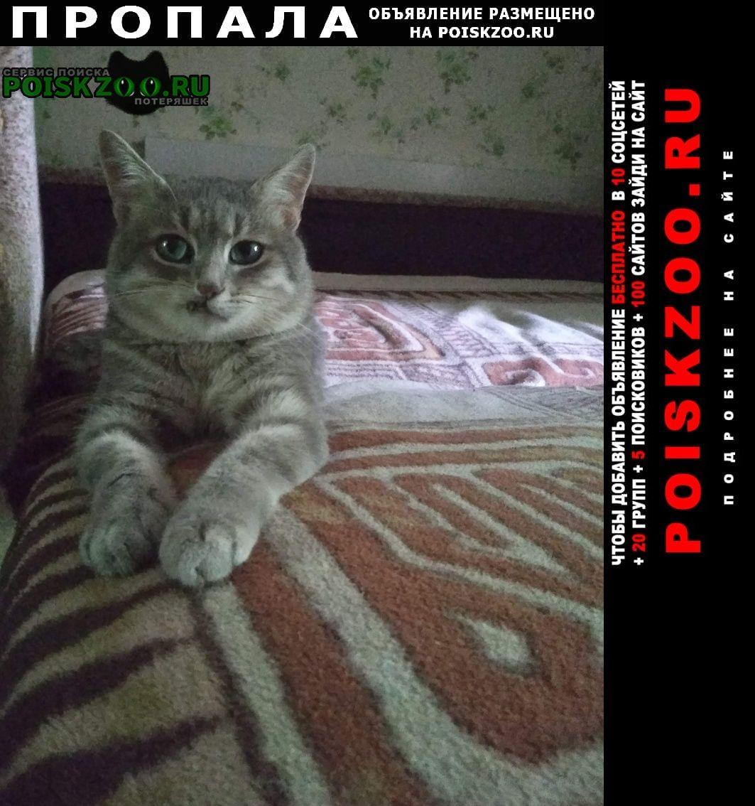 Пропал котик Калуга