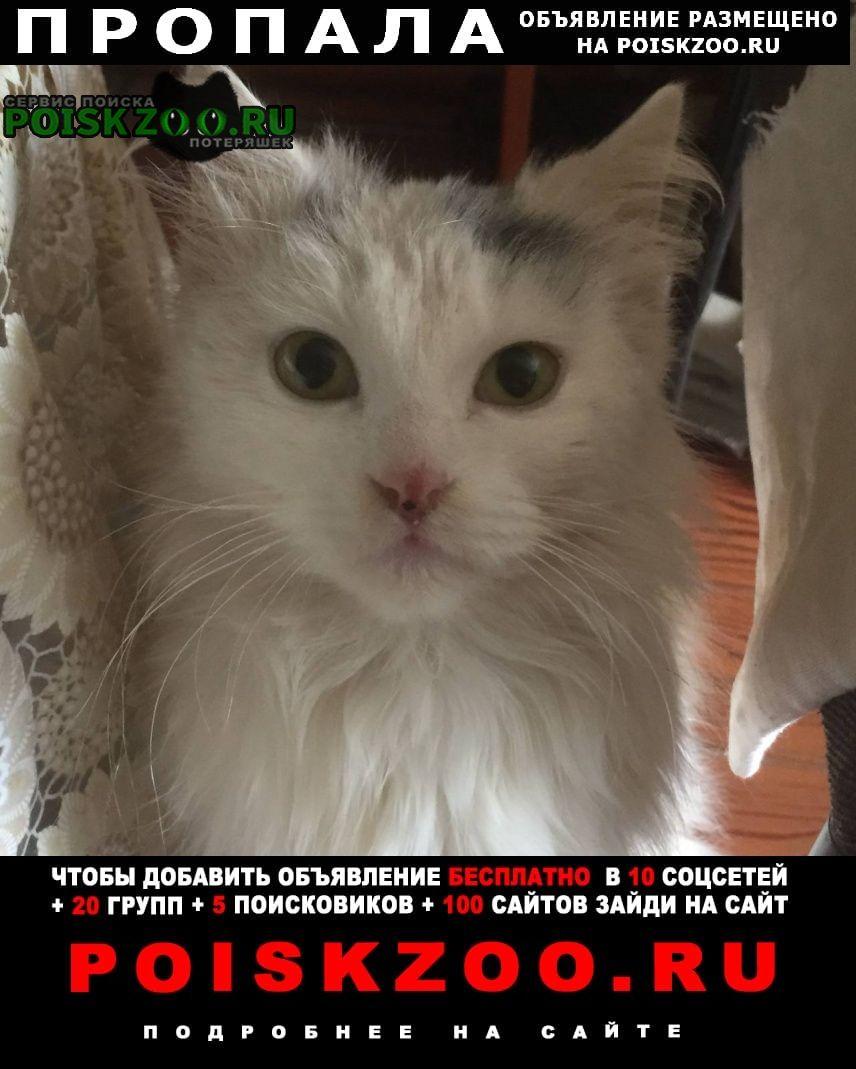 Пропала кошка помогите Старощербиновская