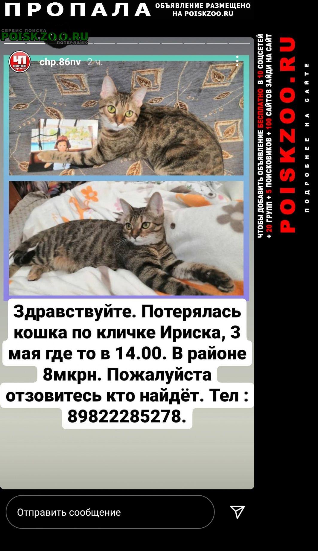 Пропала кошка Нижневартовск