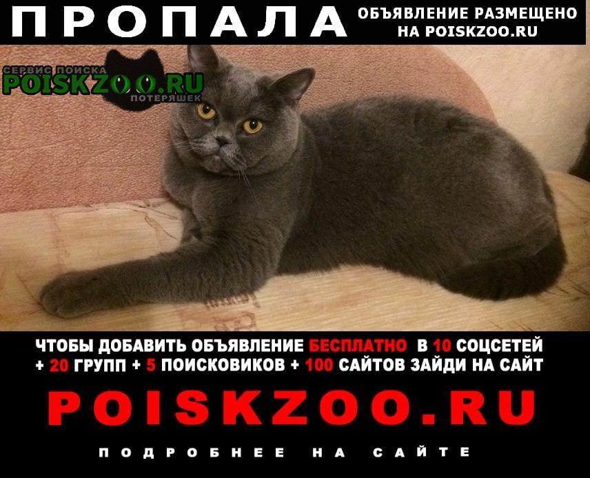 Пропала кошка Гатчина