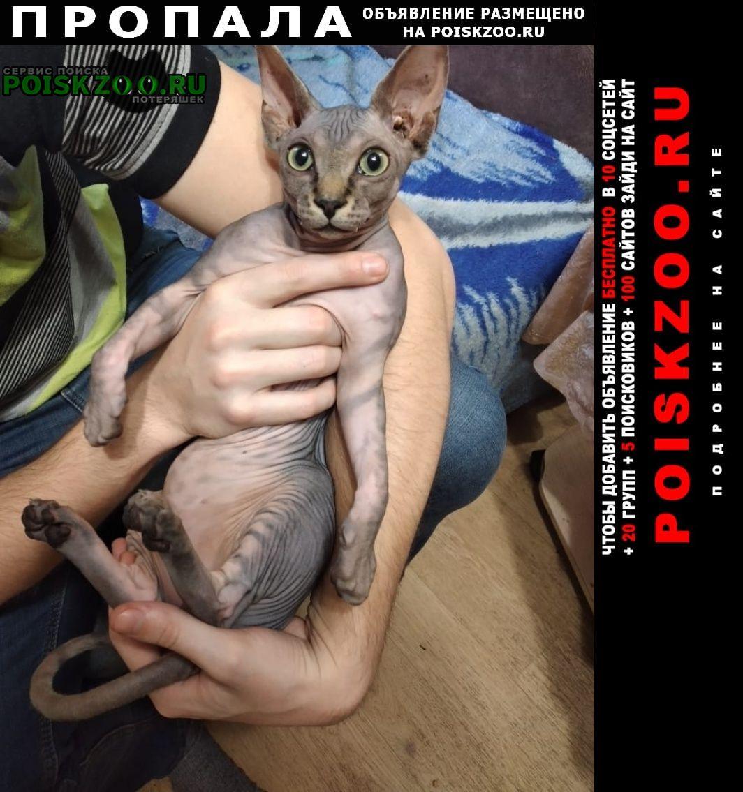Пропал кот Кореновск