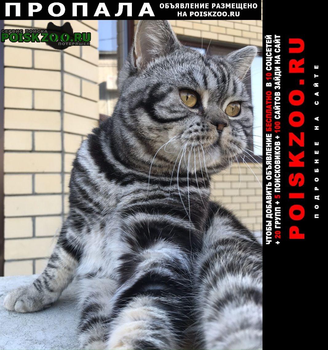 Волгоград Пропал кот шотландец