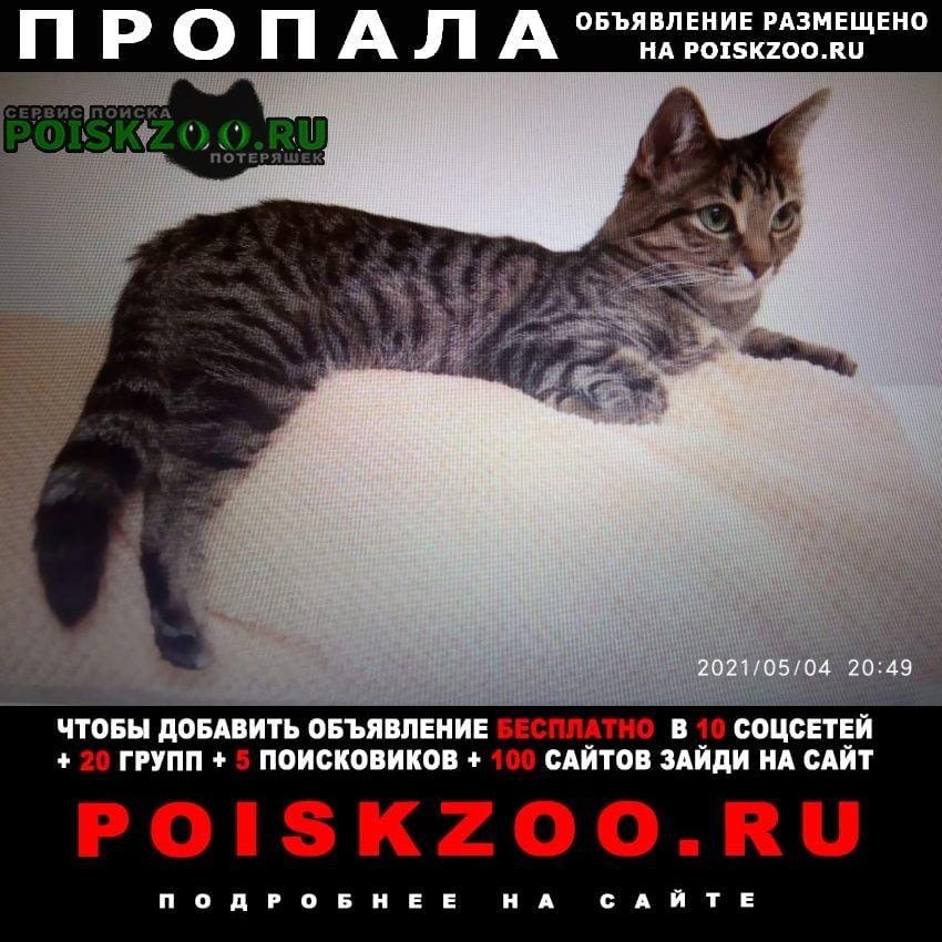 Лесной Городок Пропала кошка