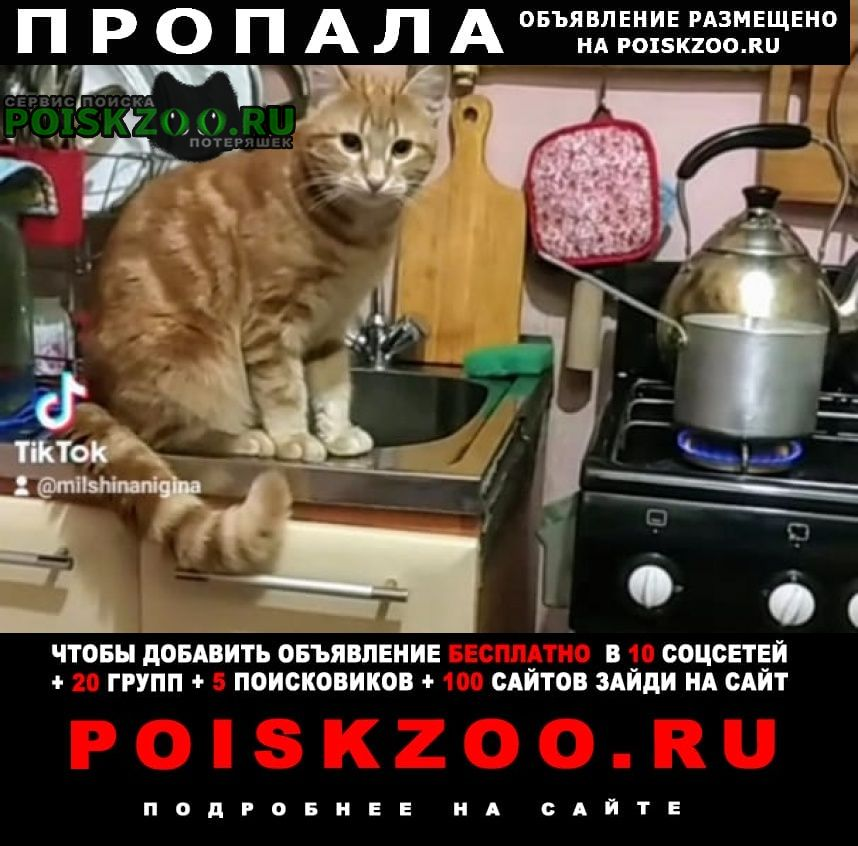 Пропал кот украли Санкт-Петербург