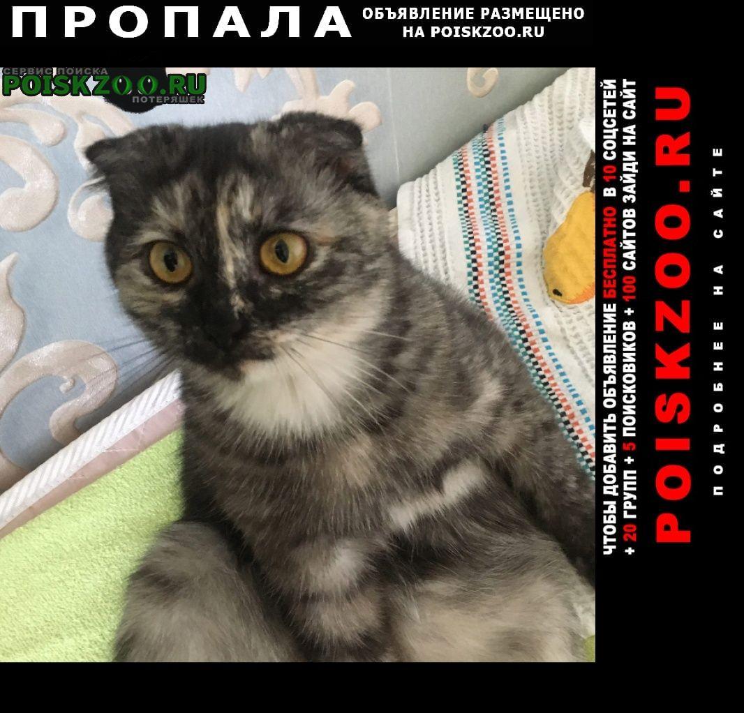 Пропала кошка помогите Астрахань