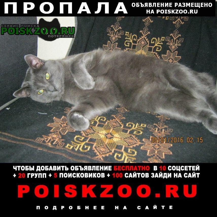 Пропал кот метис русская голубая Санкт-Петербург