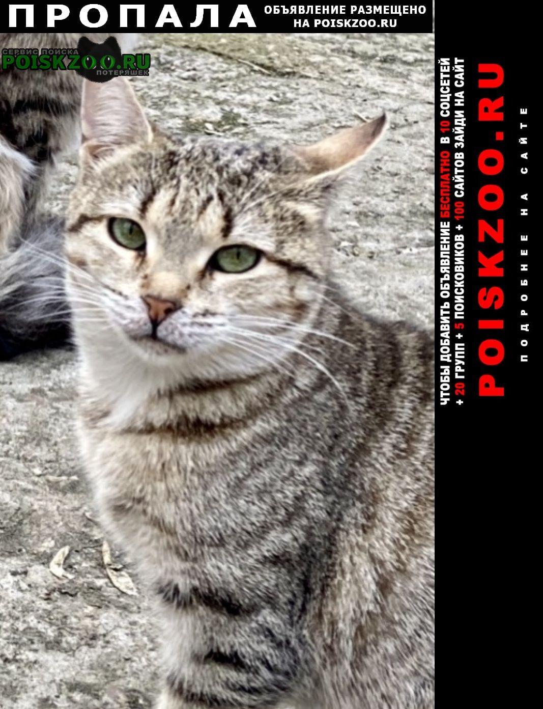 Пропала кошка прошу помочь найти за вознаграждение Москва