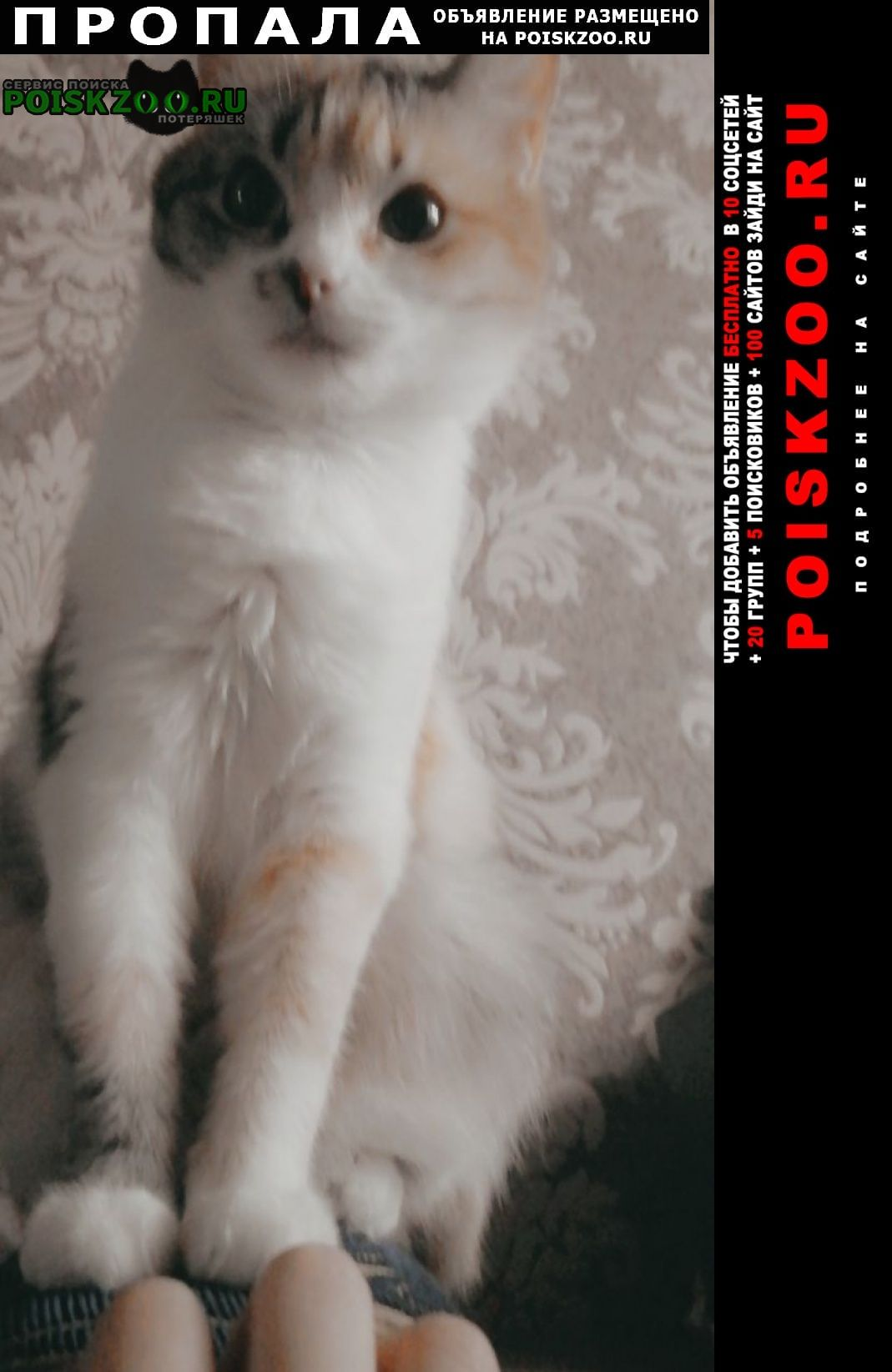 Пропала кошка Каспийск