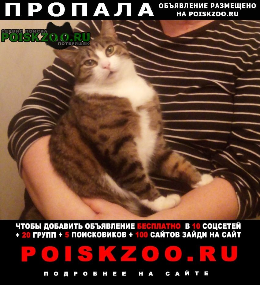 Пропала кошка спб, 07.05. Санкт-Петербург