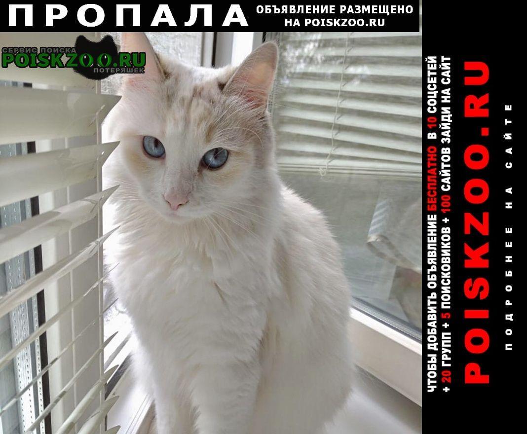 Пропала кошка белая с голубыми глазами Люберцы