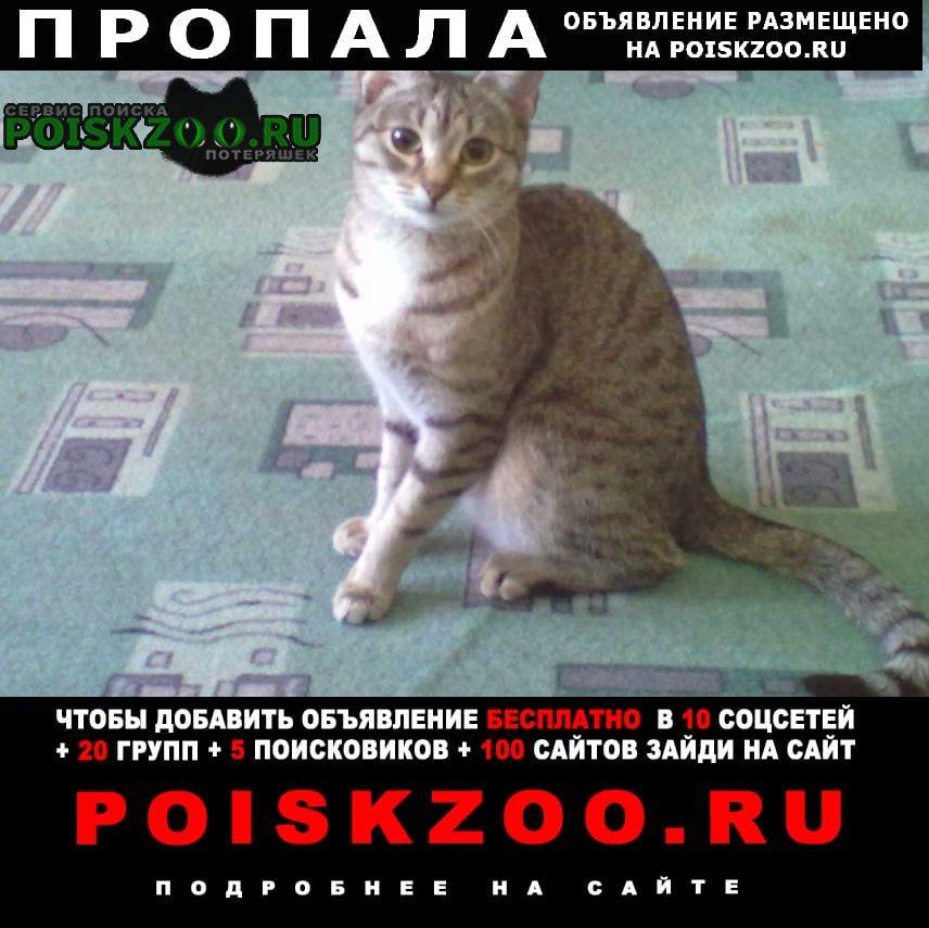 Пропала кошка Калуга
