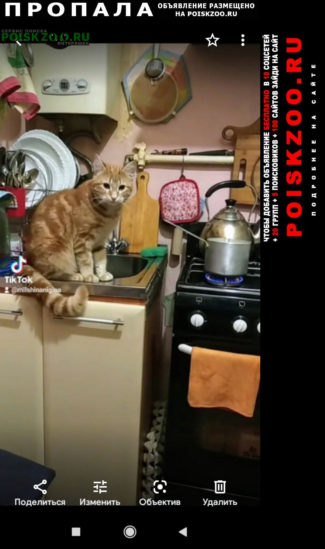 Пропал кот верните пожалуйста Санкт-Петербург