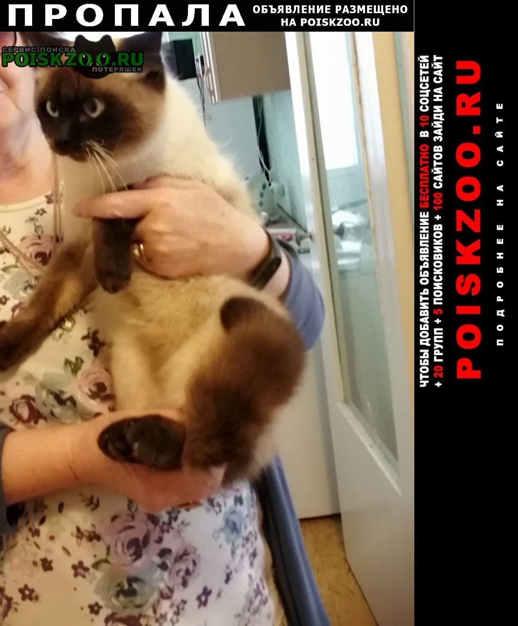 Пропал кот любимец, член семьи. Севастополь