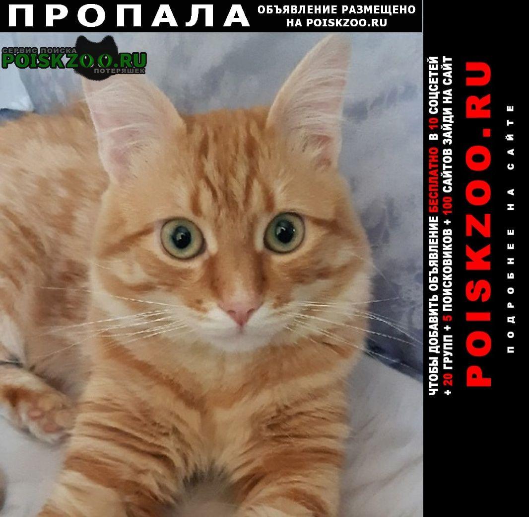Пропал кот домодедовская Москва