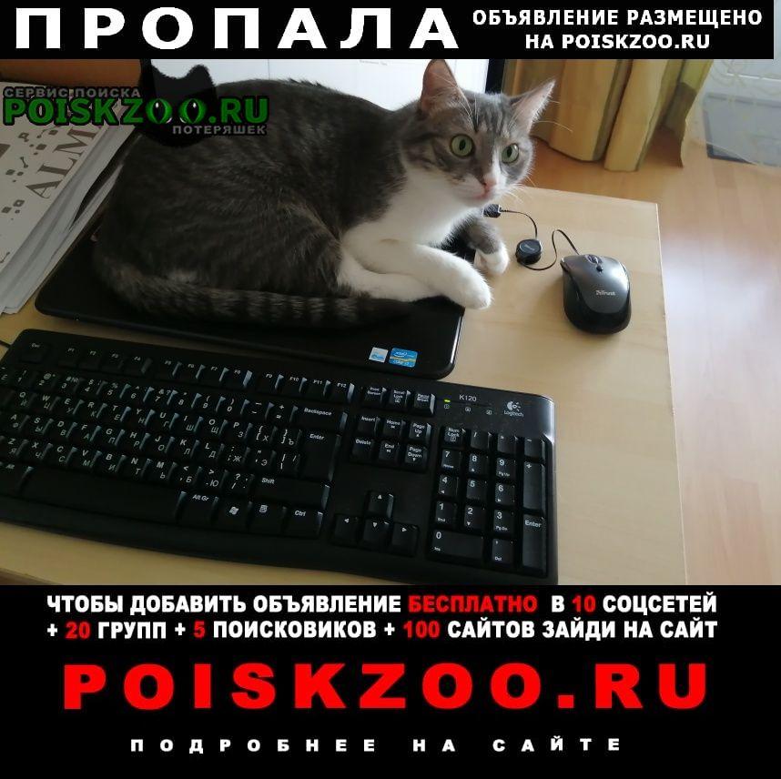 Пропала кошка ул. дубнинская 69 к2 Москва