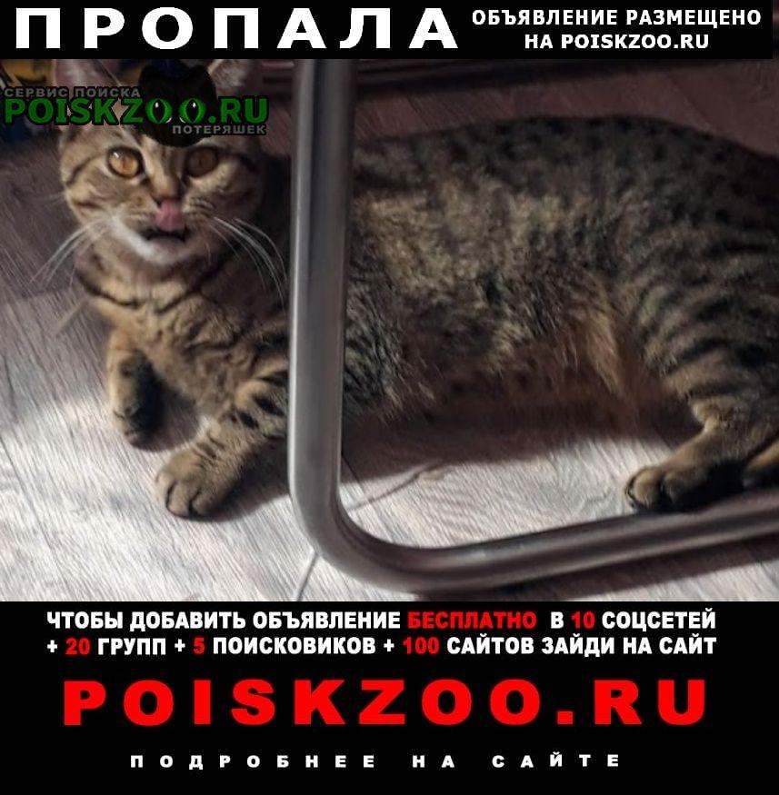 Пропала кошка инорс, ул. глинки, Уфа