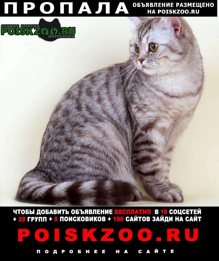 Пропала кошка полубританка полосатая Подольск