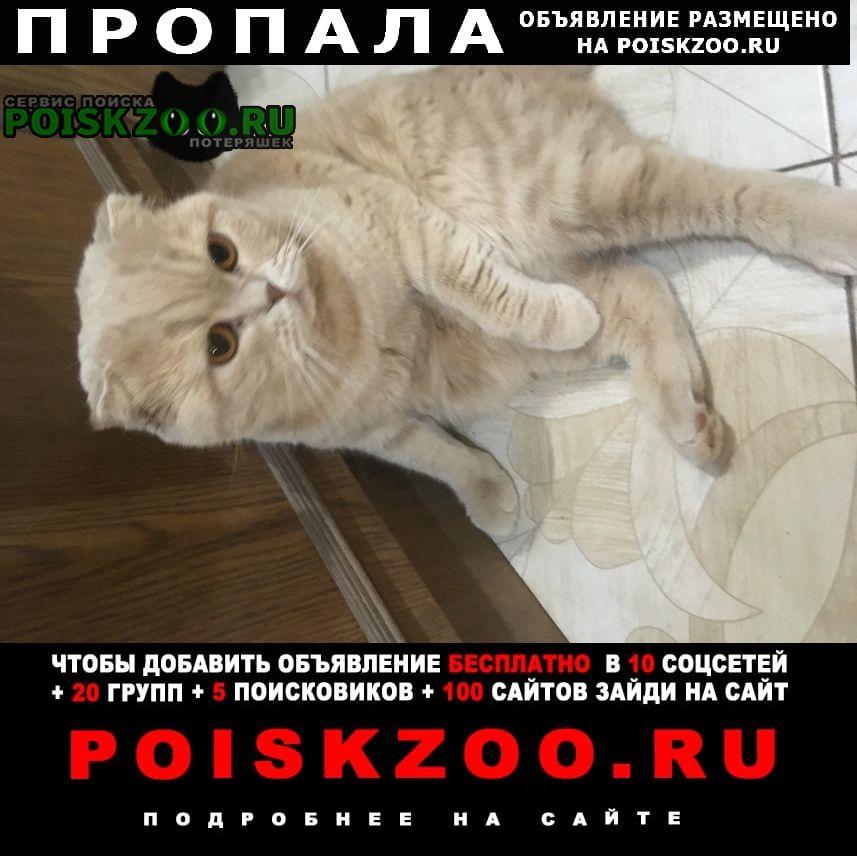 Пропал кот Аксай (Ростовская обл.)