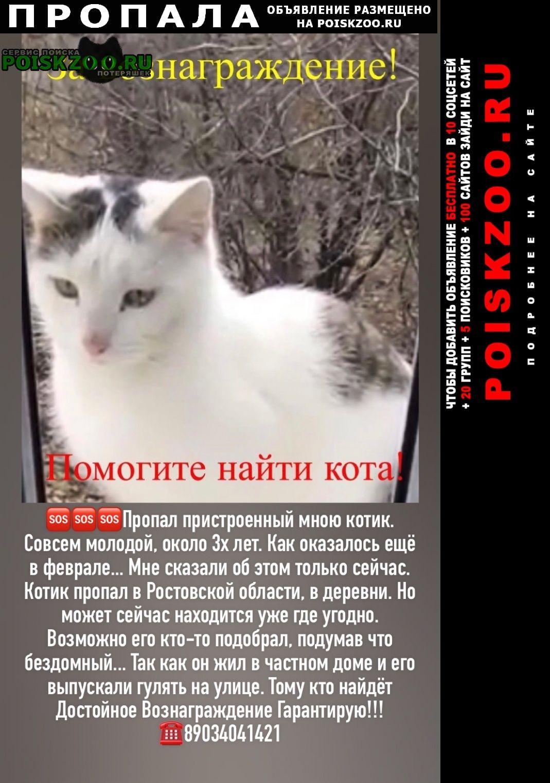 Пропал котик белый с чёрным Семикаракорск