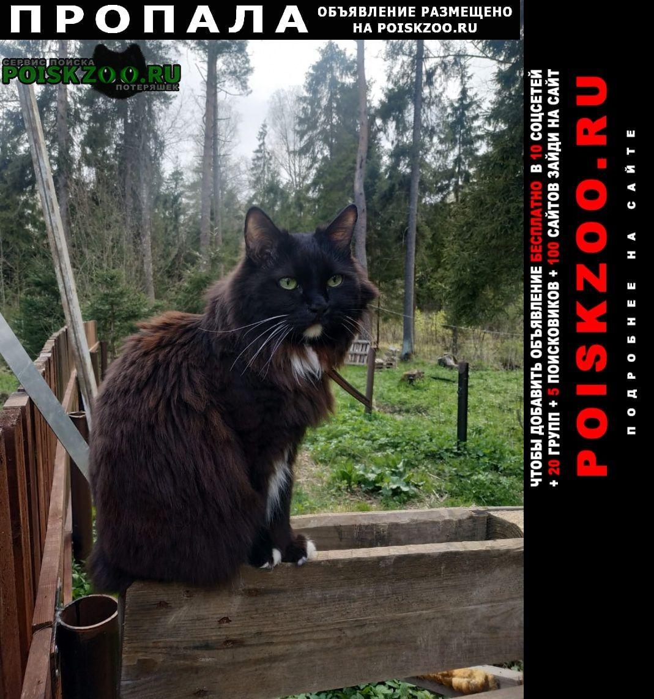 Пропала кошка поваровка Солнечногорск