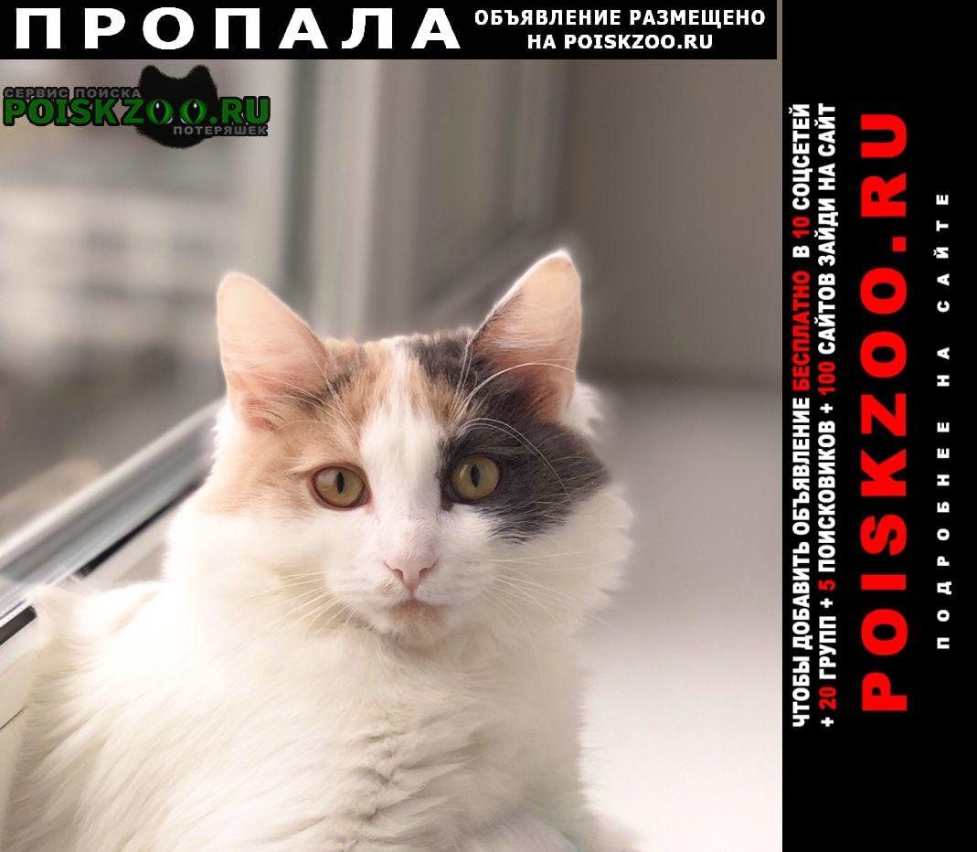 Пропала кошка помогите найти Москва
