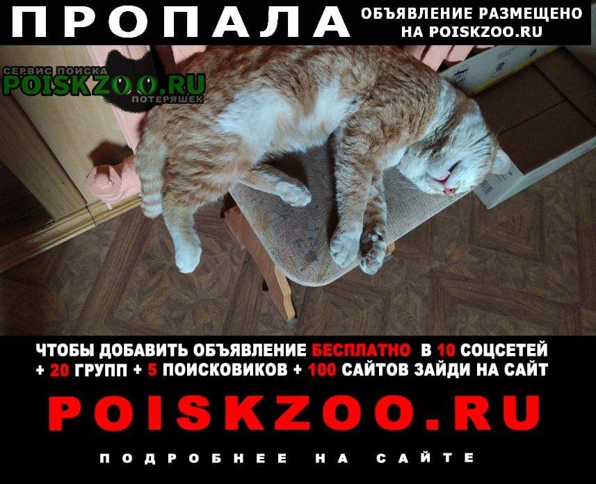 Пропал кот Богородск