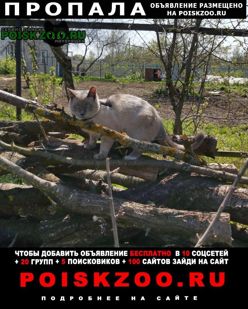 Пропал кот, снт перебатино Воскресенск