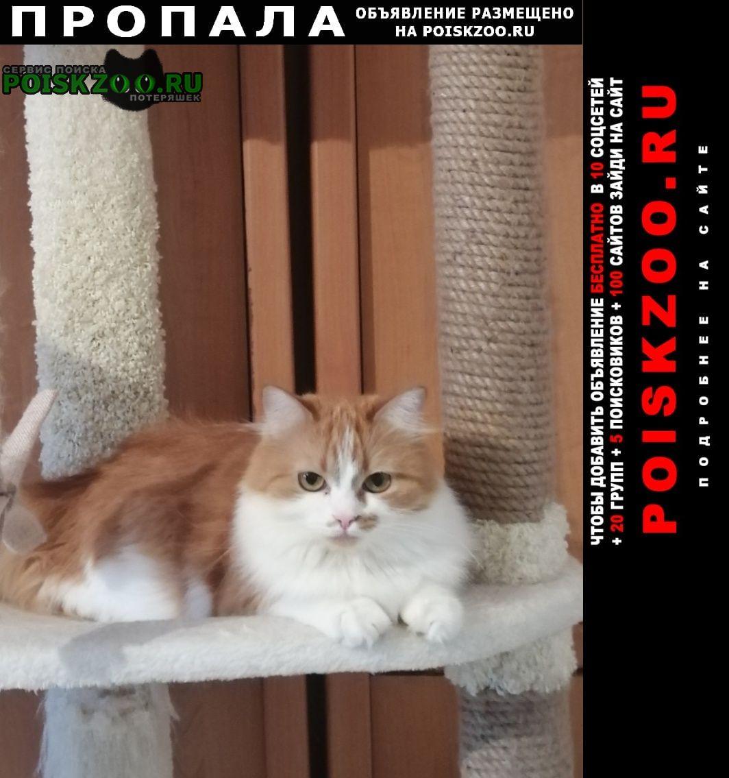 Пропала кошка Купавна