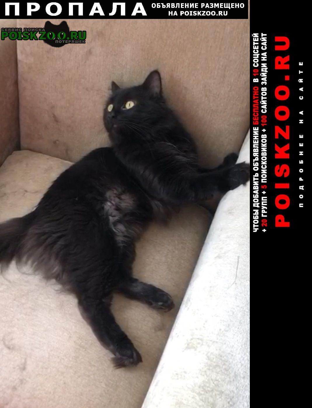 Пропал кот помогите найти за вознагражление 5 000 Краснодар