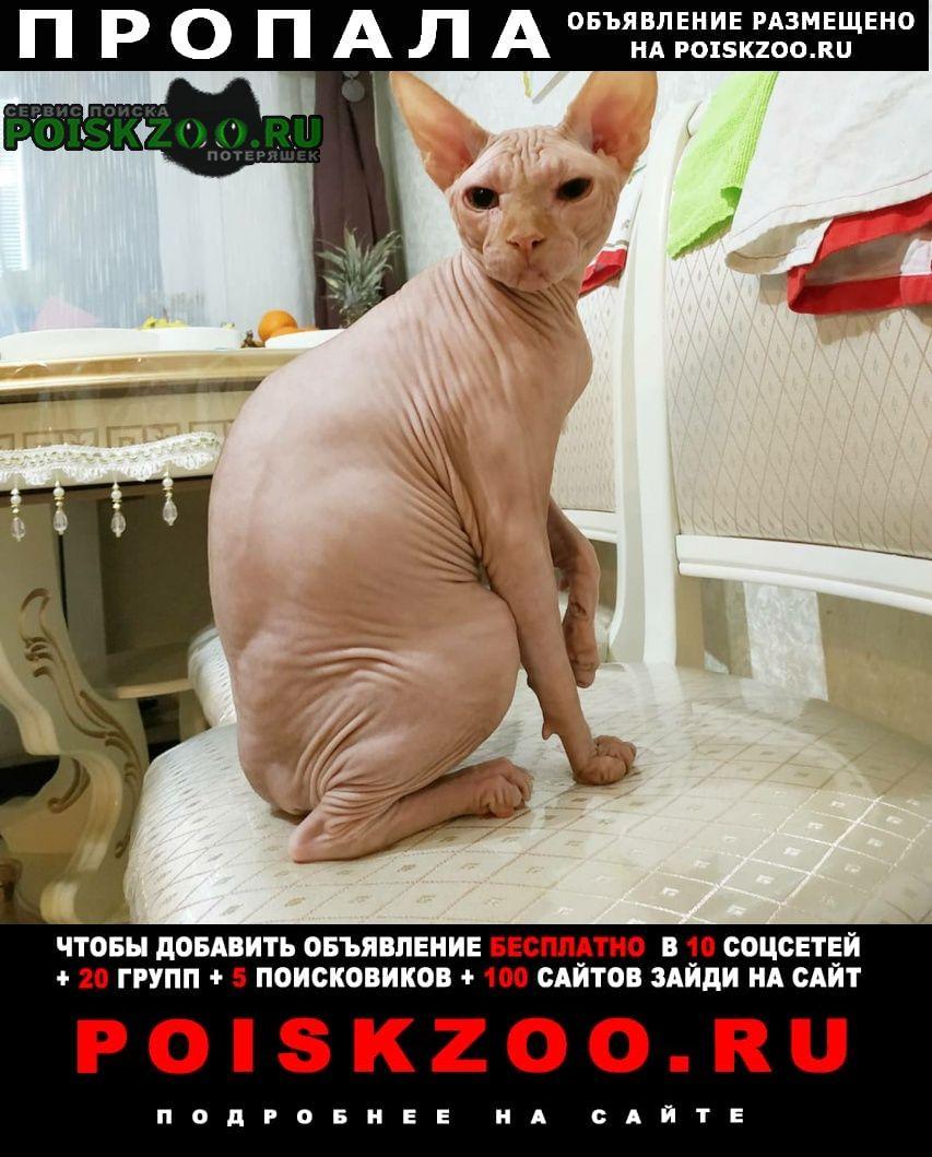 Пропал кот сфинкс Домодедово