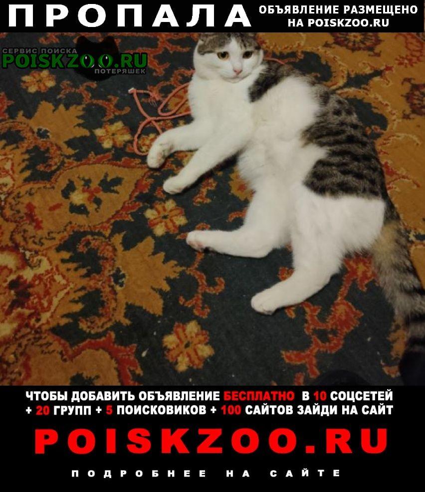 Пропала кошка 2года, лапы и живот белые серая спина. Арзамас