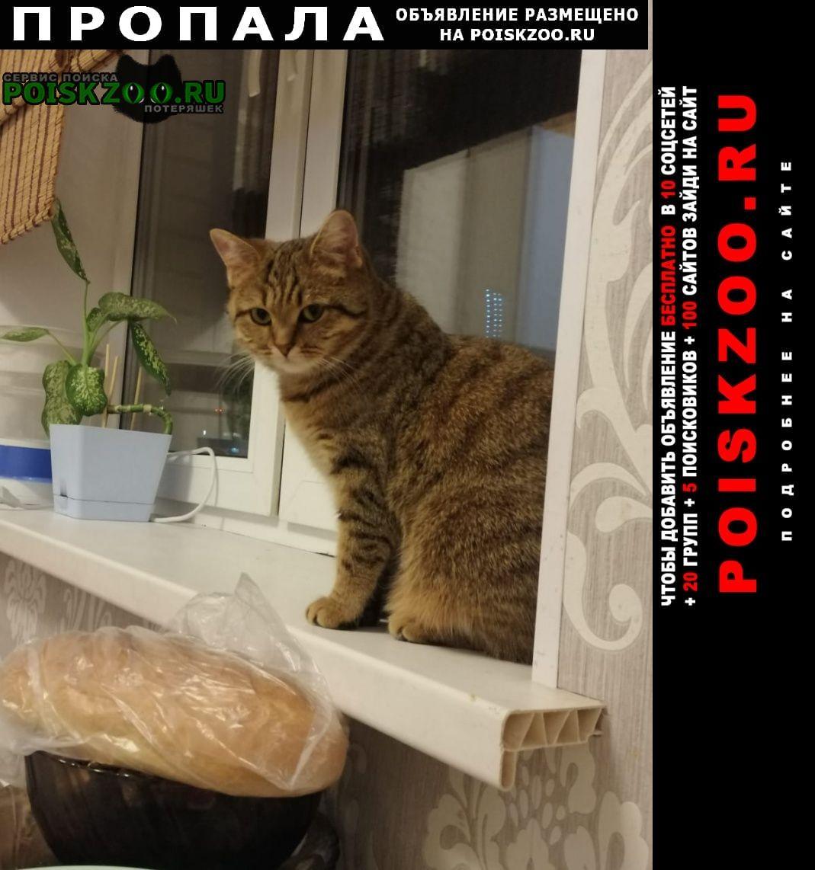 Пропала кошка Ивантеевка (Московская обл.)