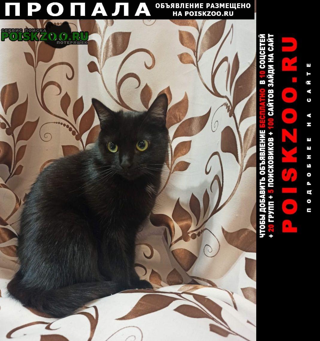Пропала кошка Колпино