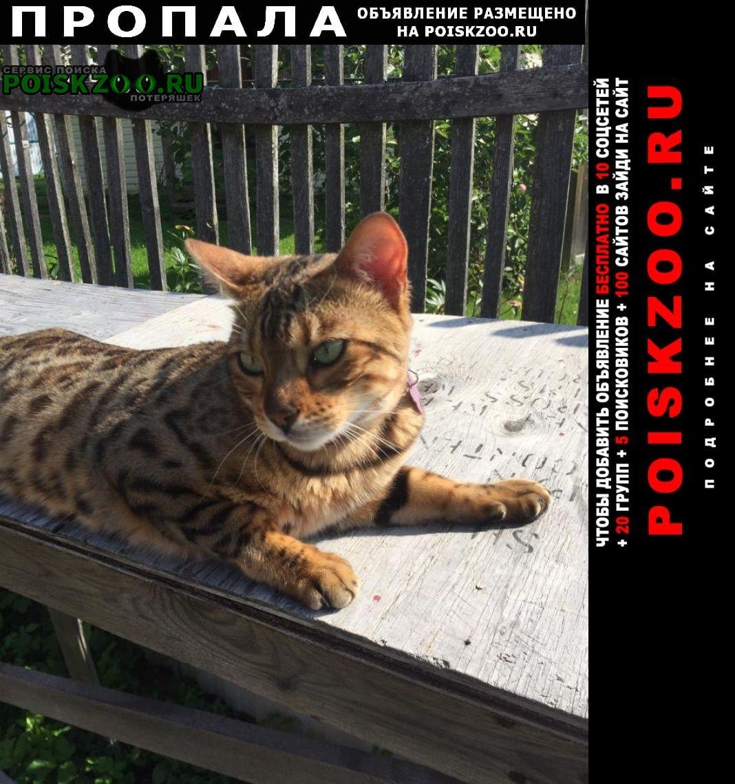 Пропала кошка Дмитров