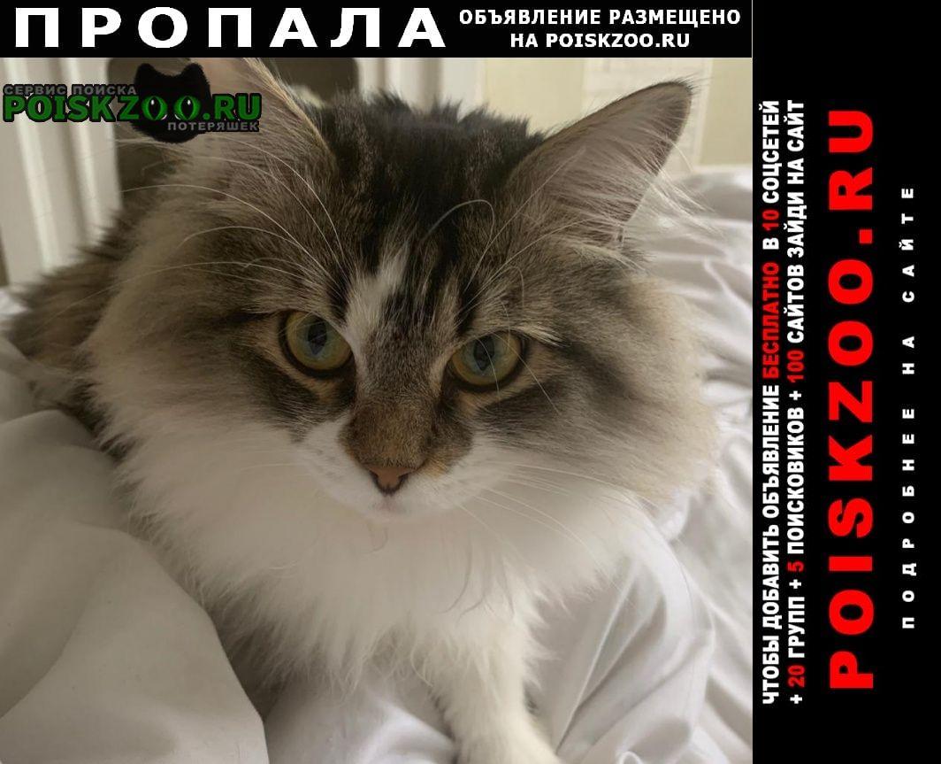 Пропал кот молодой Екатеринбург