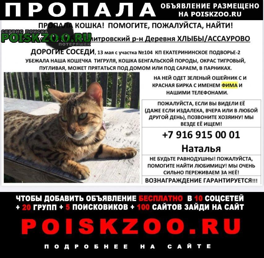 Пропала кошка бенгальская потерялась Москва