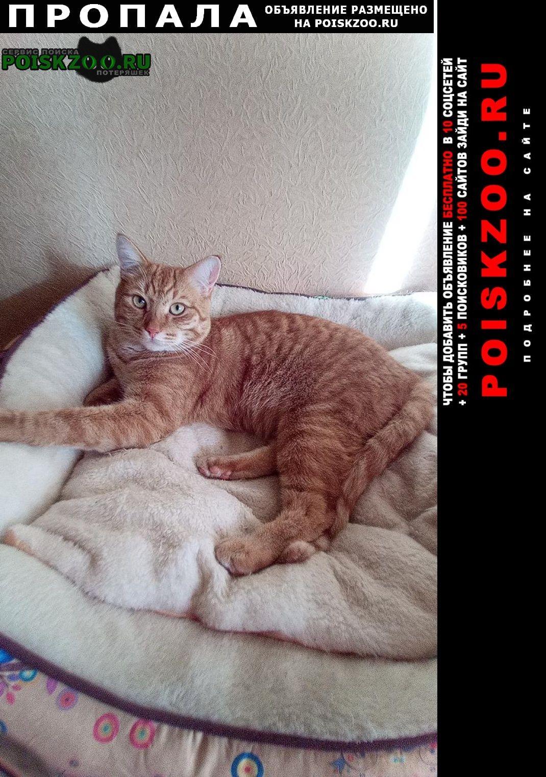 Пропал кот рыжий сеня Солнечногорск