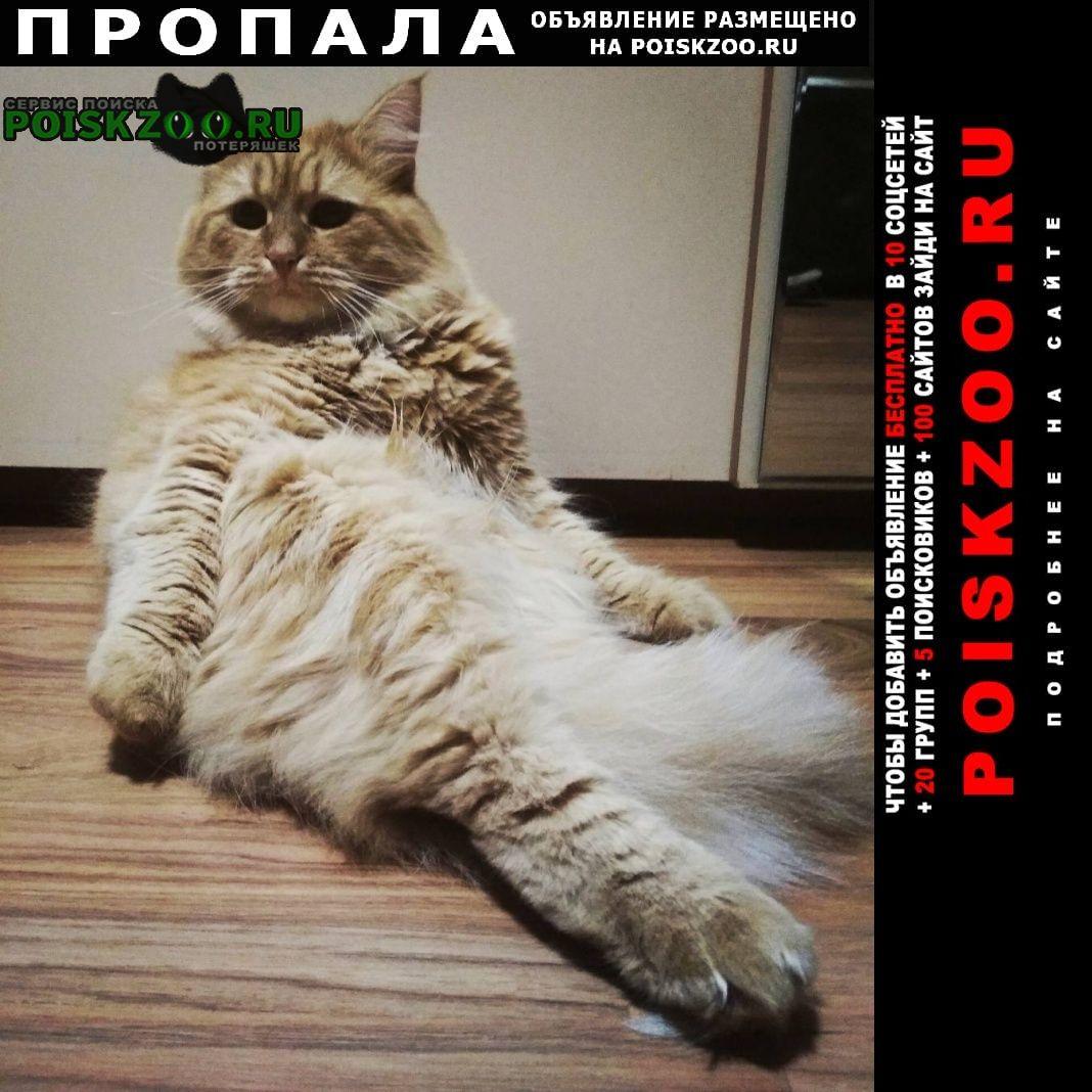 Пропал кот Екатеринбург