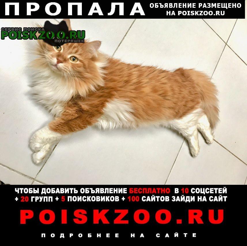 Пропал кот рыжего окраса Пермь