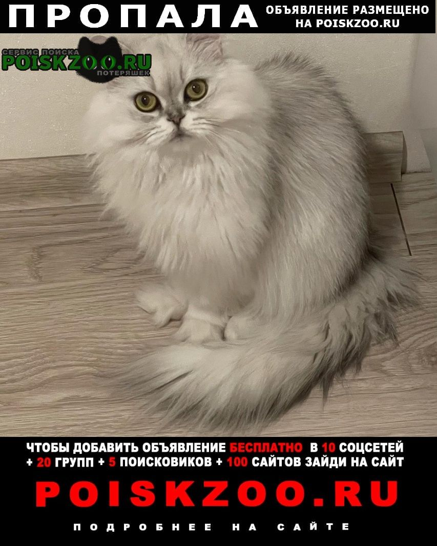 Пропала кошка кошечка в районе солнечный Стерлитамак