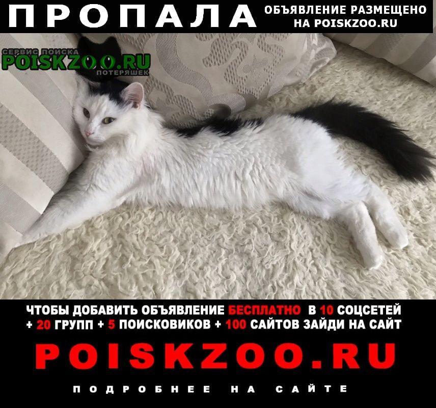 Пропал котик белый с чёрными пятнами Красногорск