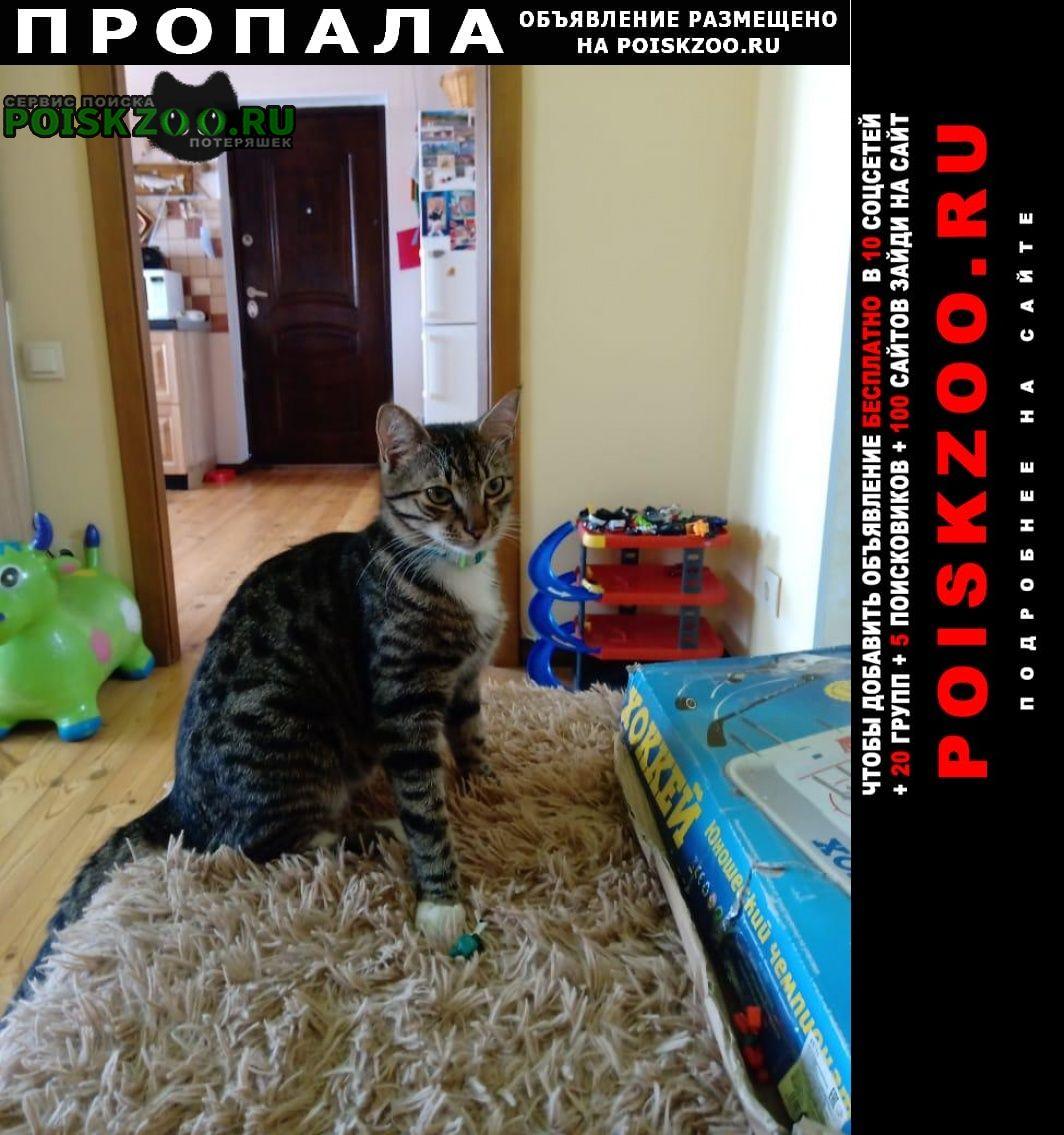 Пропал кот Севастополь