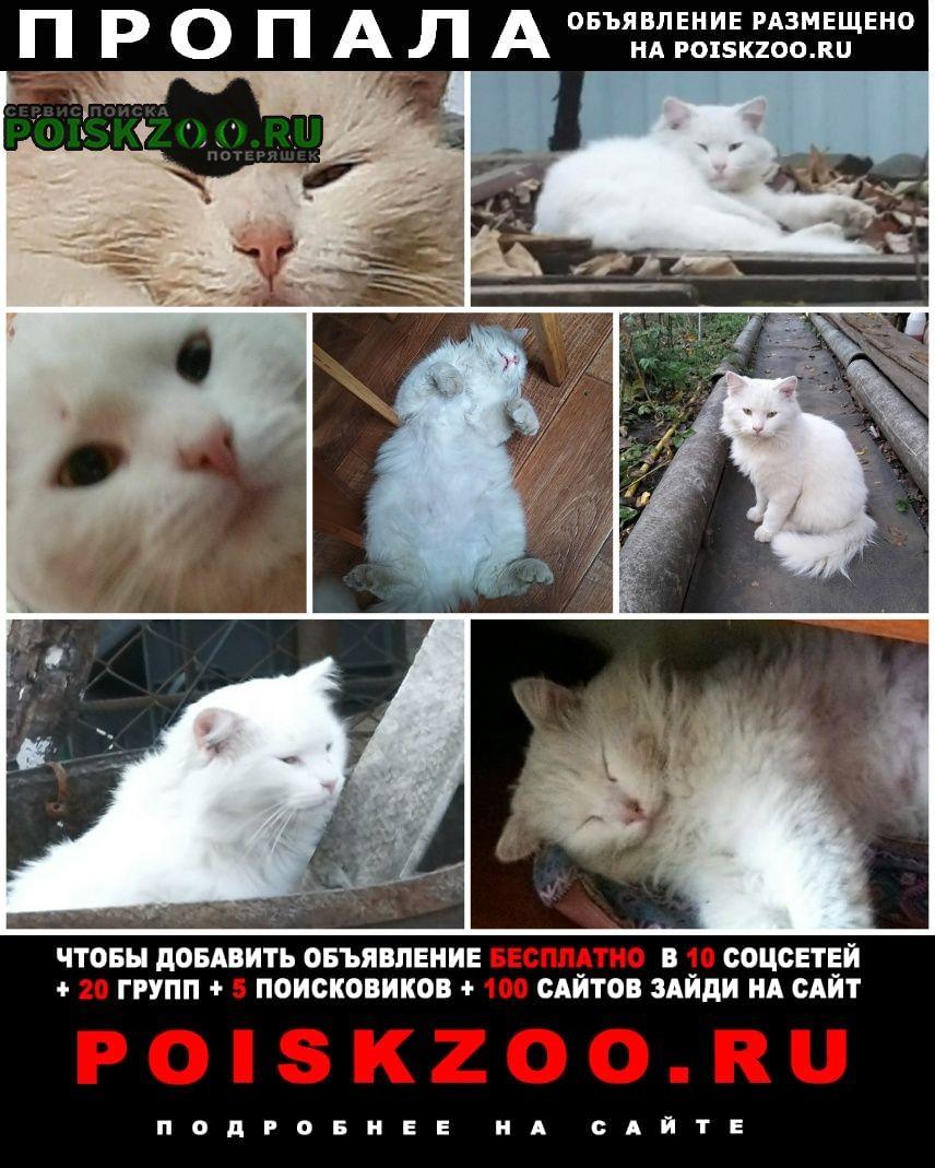Пропал кот Армавир
