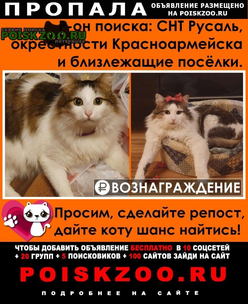 Пропал кот помогите найти Красноармейск (Московская обл.)