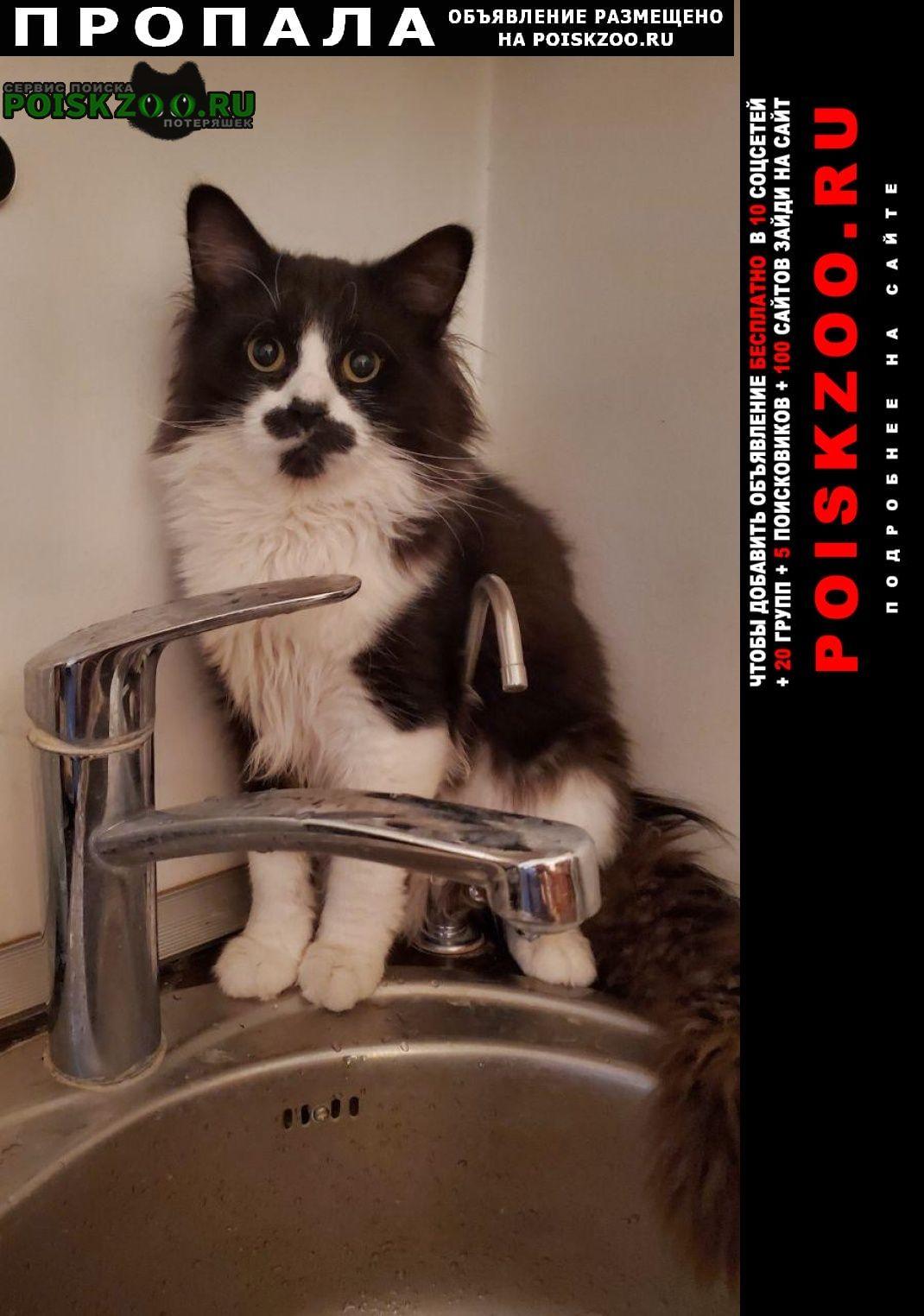 Пропал кот черно-белый Москва