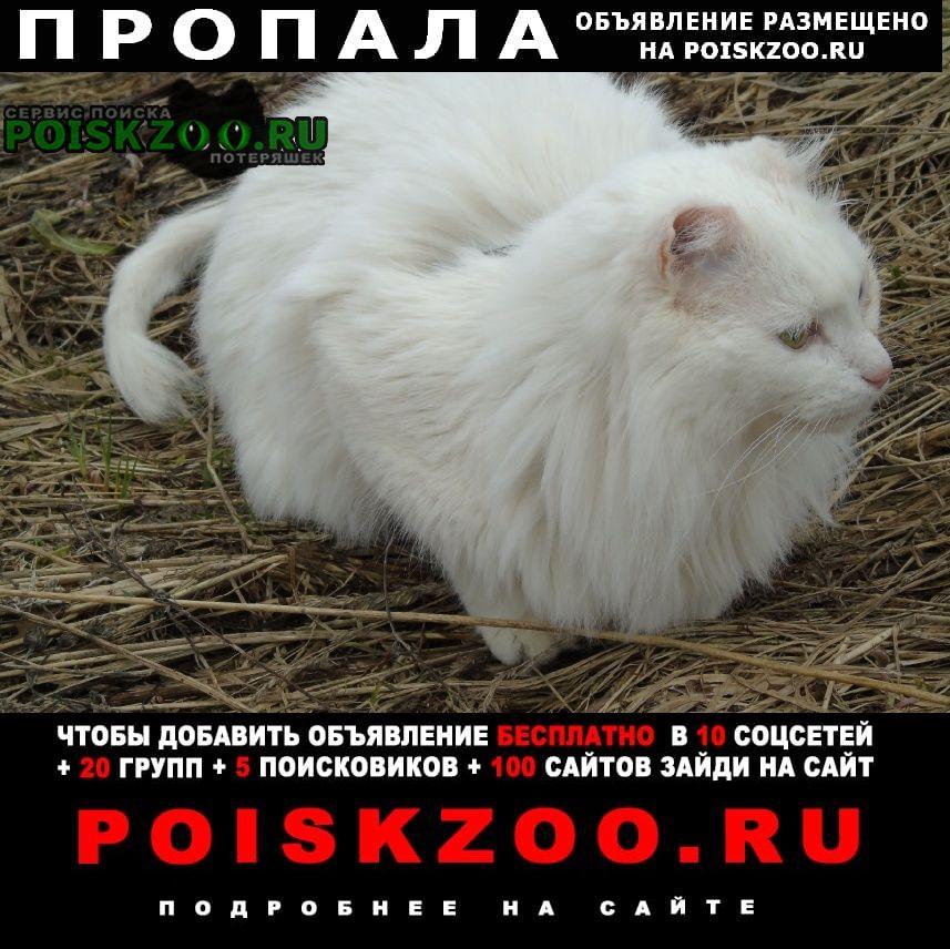 Пропал кот Рыбинск