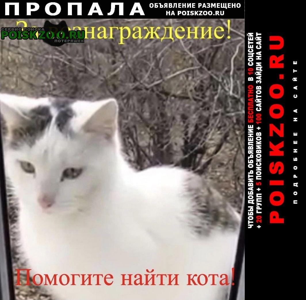 Пропал кот Константиновск