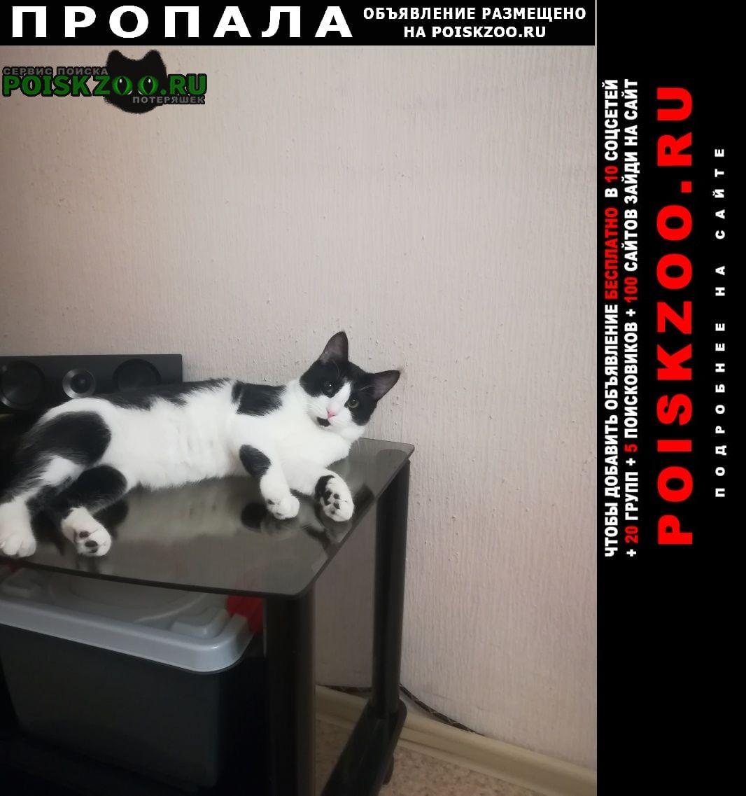 Пропал кот Поронайск