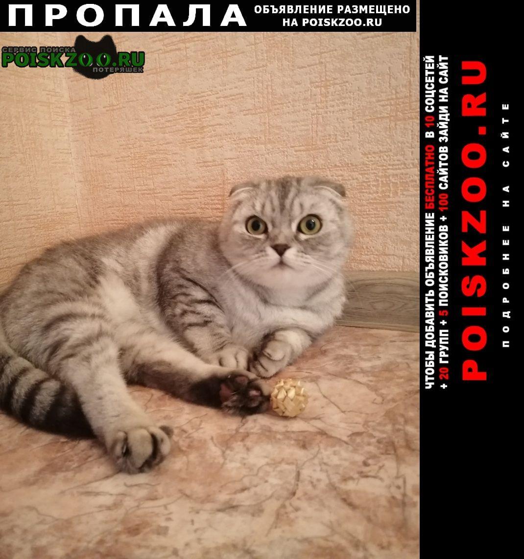 Пропала кошка помогите найти любимицу Воронеж